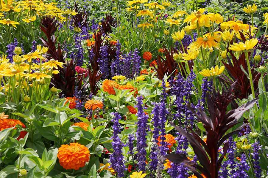 Image de la catégorie PLANTES D'EXTERIEUR