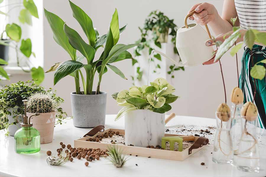 Image de la catégorie ENGRAIS PLANTE INTERIEUR