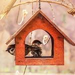 Mangeoires pour oiseaux des jardins
